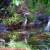 Great Blue Heron | June 1, 2008 thumbnail